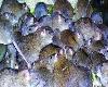 موشهای آدمخوار در انتظار زلزلهزدگان تهرانی